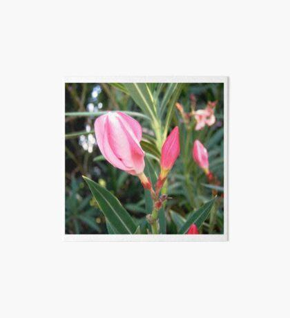 Oleander buds Art Board