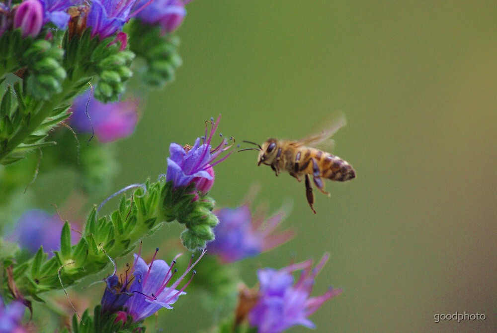 Landing bees by goodphoto