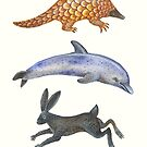 Pangolin, dolphin and a hare by Vlad Stankovic