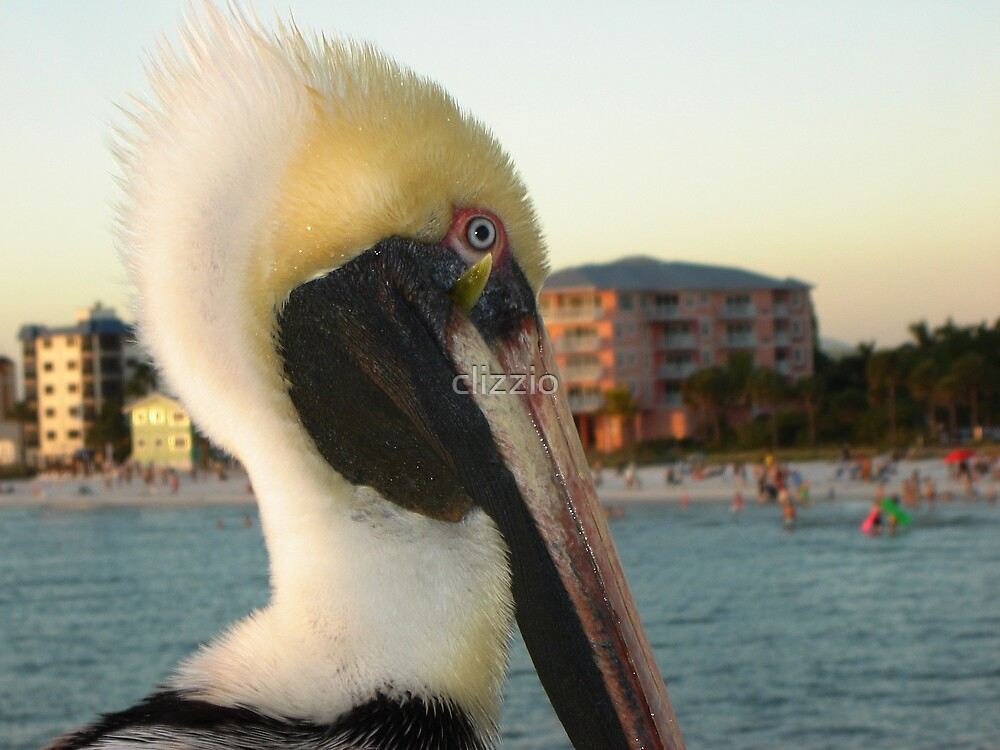 Pelican Gone Fishing by clizzio