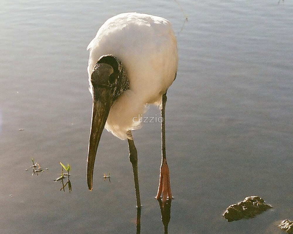 Wood Stork by clizzio