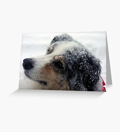Mel in Snow Greeting Card