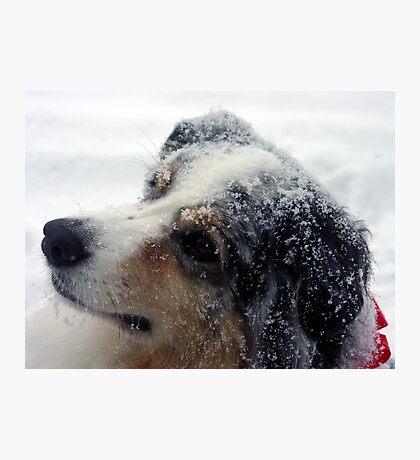 Mel in Snow Photographic Print