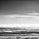 Sea Birds above Keiss Beach, Caithness, Scotland by Iain MacLean