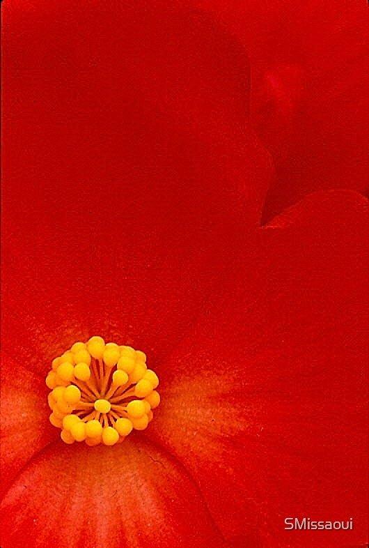 Crimson Close Up by SMissaoui