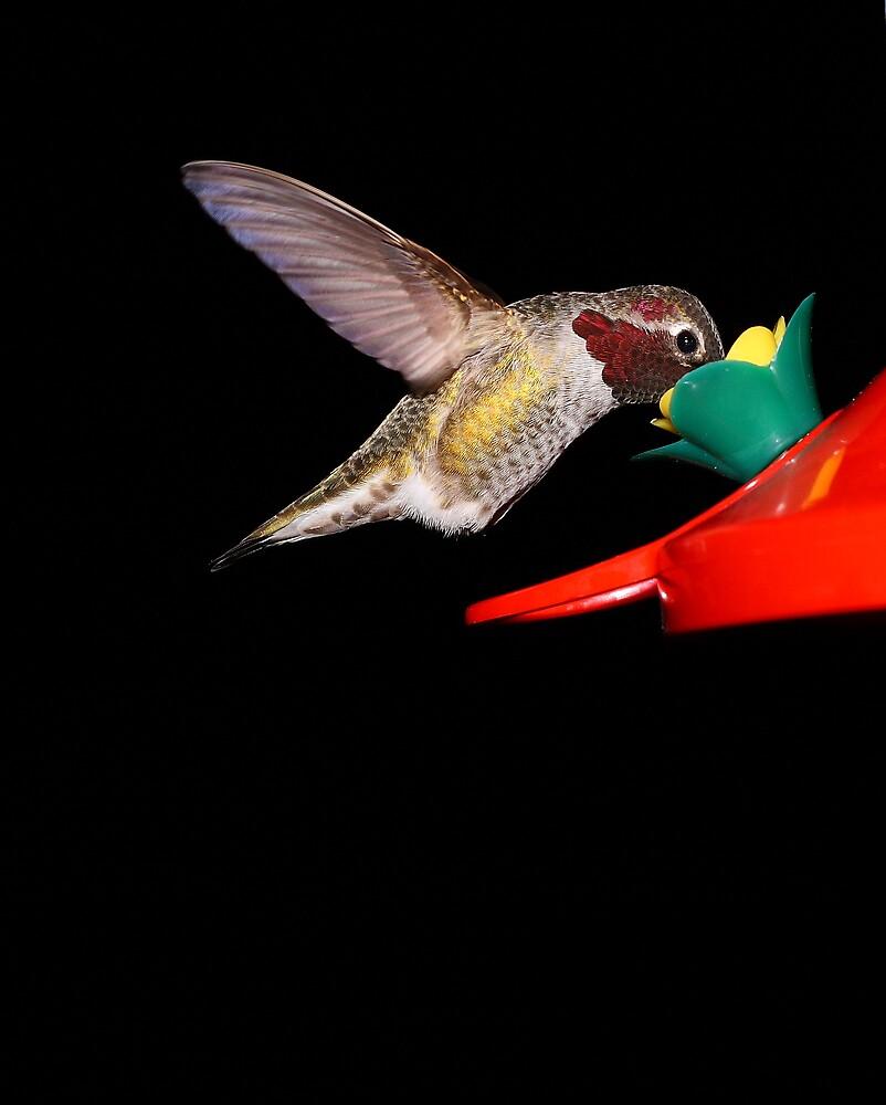 Hummingbird at Feeder by Mark Yager