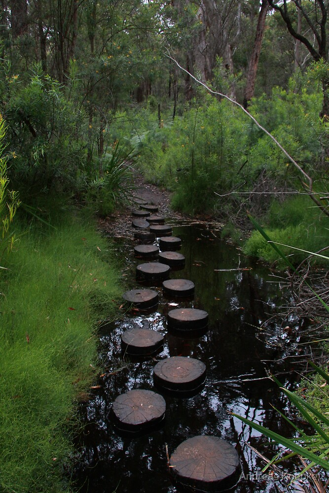 Stream crossing by Andreas Koepke