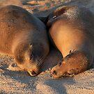 Sleeping Beauties by Sue  Cullumber
