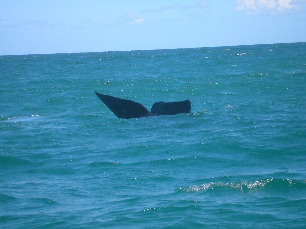 Whale Tail by Jan  Saggers
