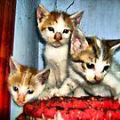 "Three siblings by "" RiSH """