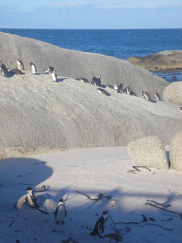 Penguins at Dusk by Jan  Saggers