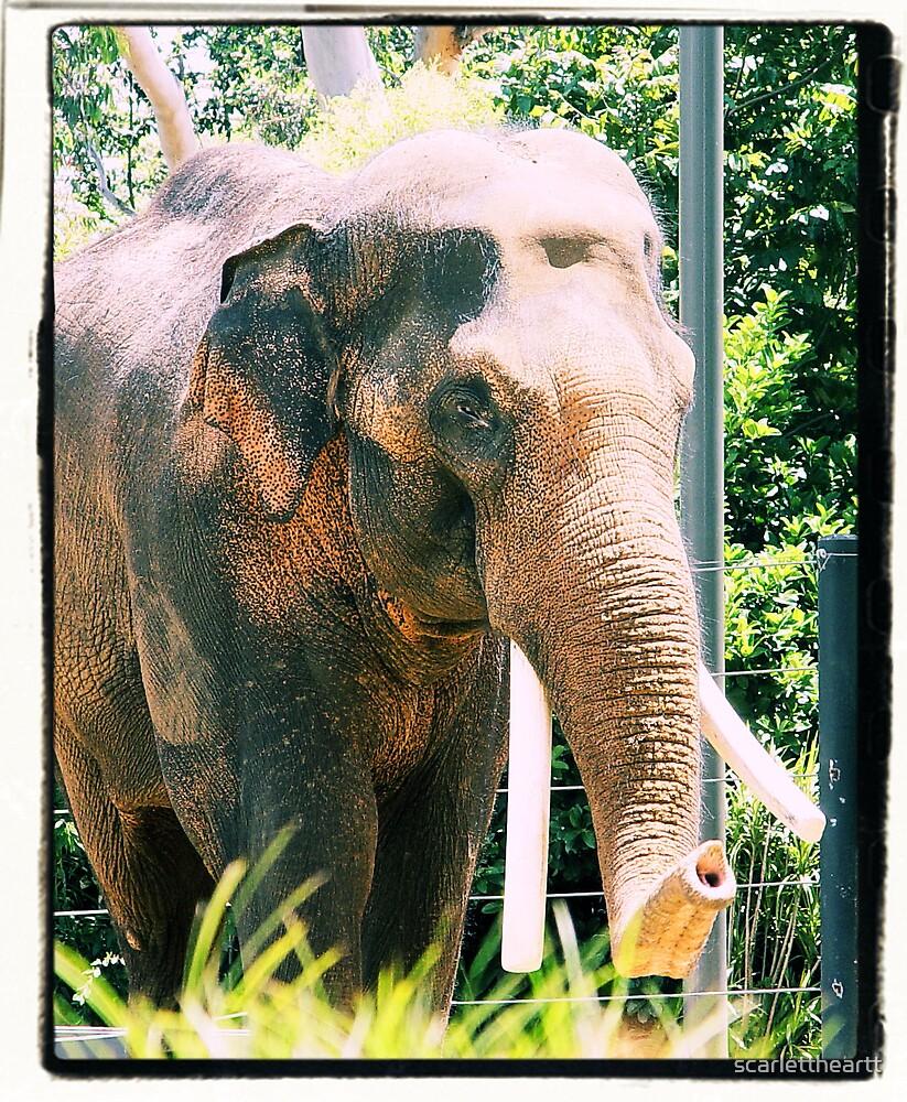 elephant too by scarlettheartt