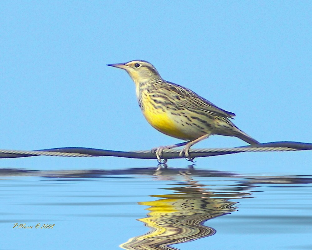 Bird on a Wire by Pat Moore