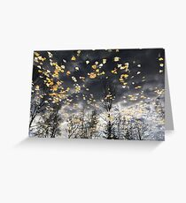 Pond and leaves Greeting Card