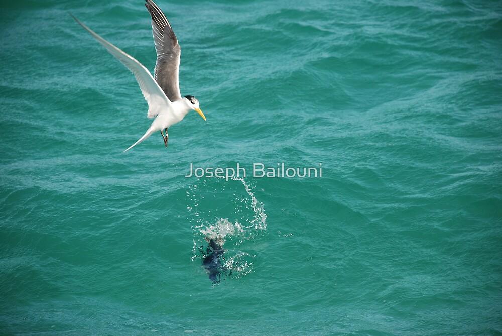 Lucky Penguin by Joseph Bailouni
