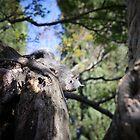 Squirrel! by Lynn Starner