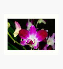 Singapore Orchid Art Print