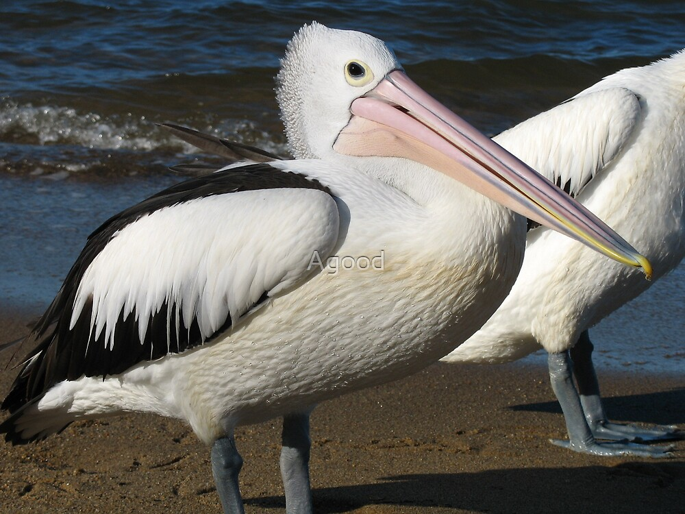 Pelican by Agood