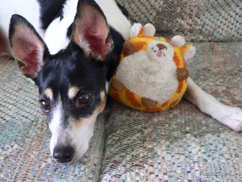 Buddy with his Toy by Rosalie Scanlon