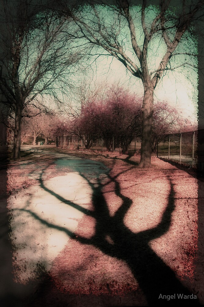 shadow by Angel Warda