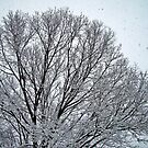 Frosted Branches by Tommy Seibold