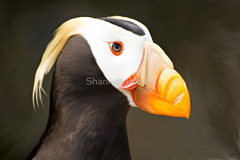 Puffin by Shannon Beauford