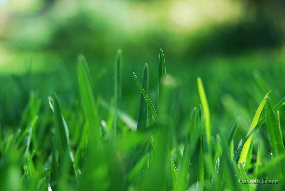 Grass by Hannah Grace