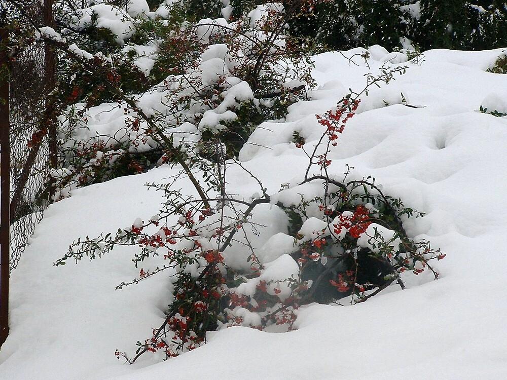 Snow on... by zangi12