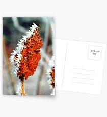 Frosty Sumac Postcards