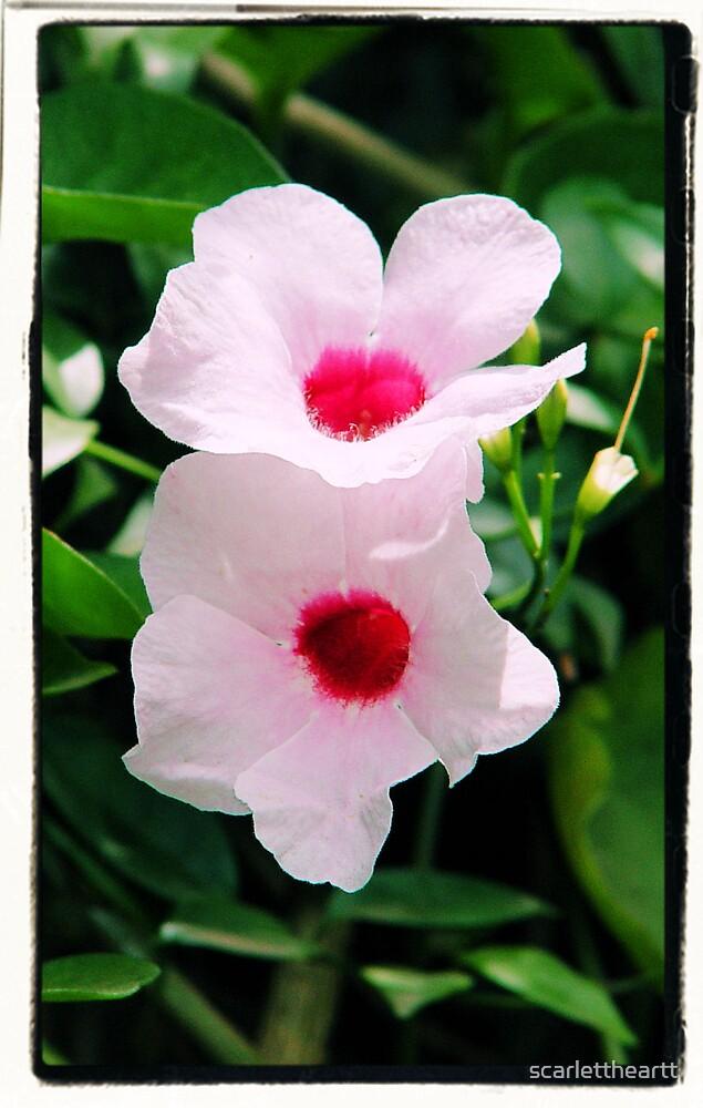 pretty in pink by scarlettheartt