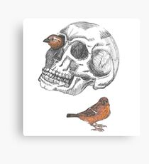 Skull With Sparrows Canvas Print