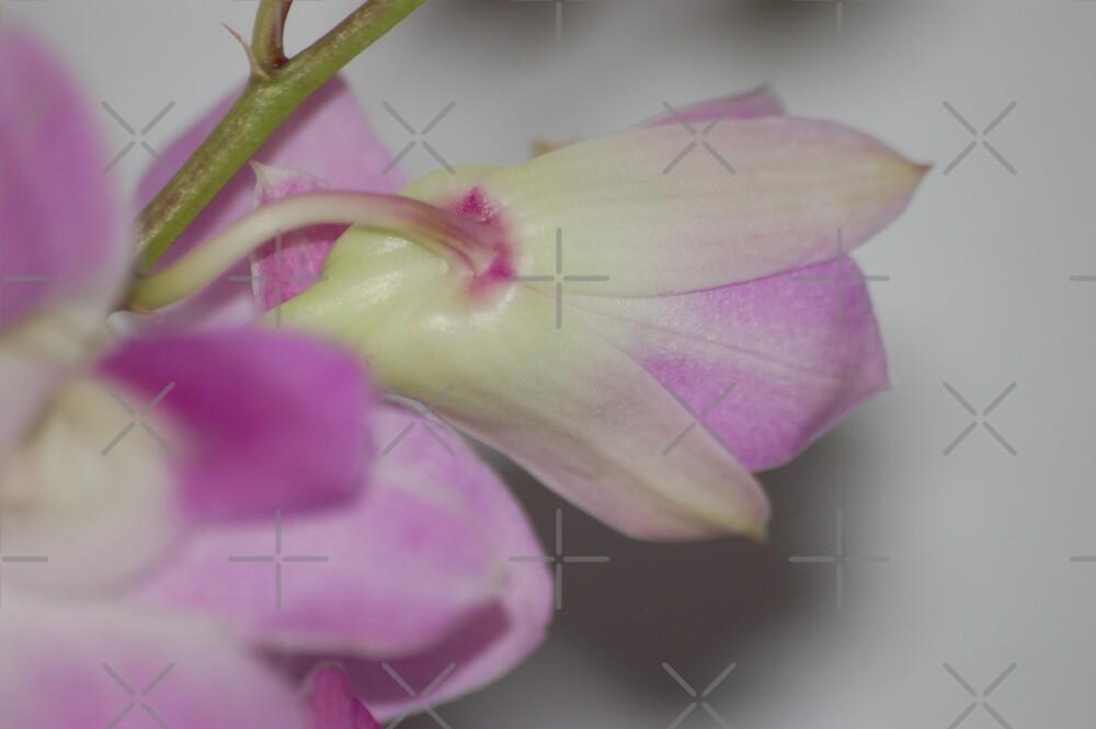 Flower for queens by loiteke