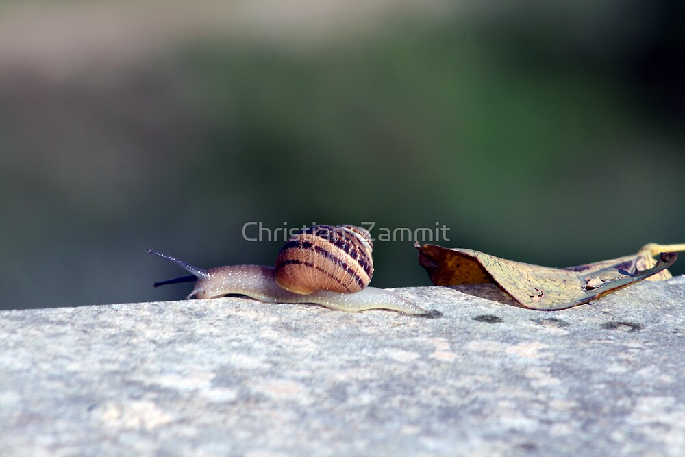 On the edge by Christian  Zammit