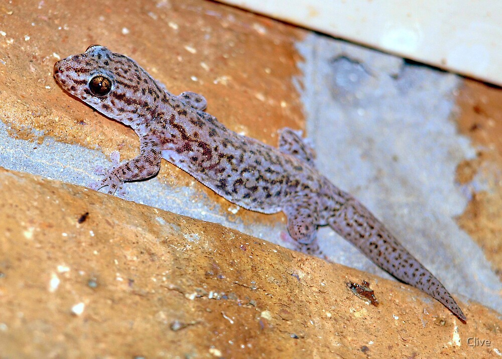 Gecko by Clive