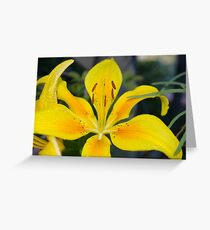 Pollyanna (Asiatic Lily) Greeting Card