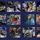 Hurmerinta Red Sea Sealife Collage 3 by hurmerinta