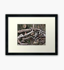 Stick and Wire Framed Print