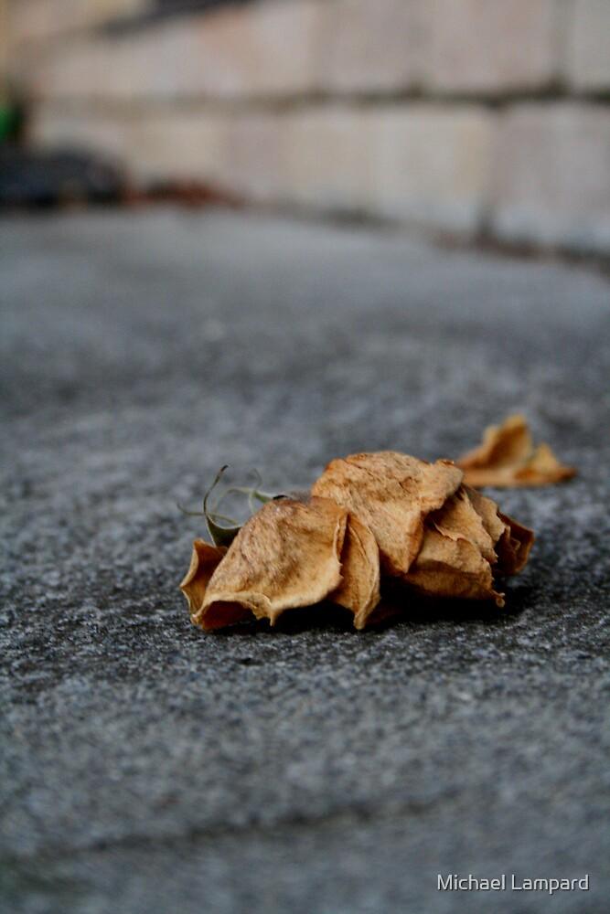 Dead Rose by Michael Lampard