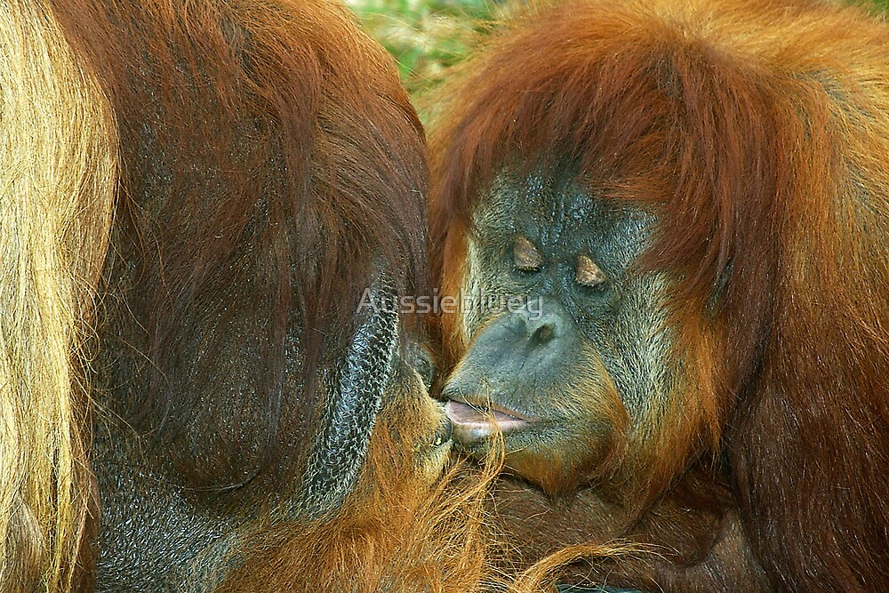 Kiss me, you Fool. by Aussiebluey