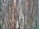 Barn Door (detail) by Aaron Campbell