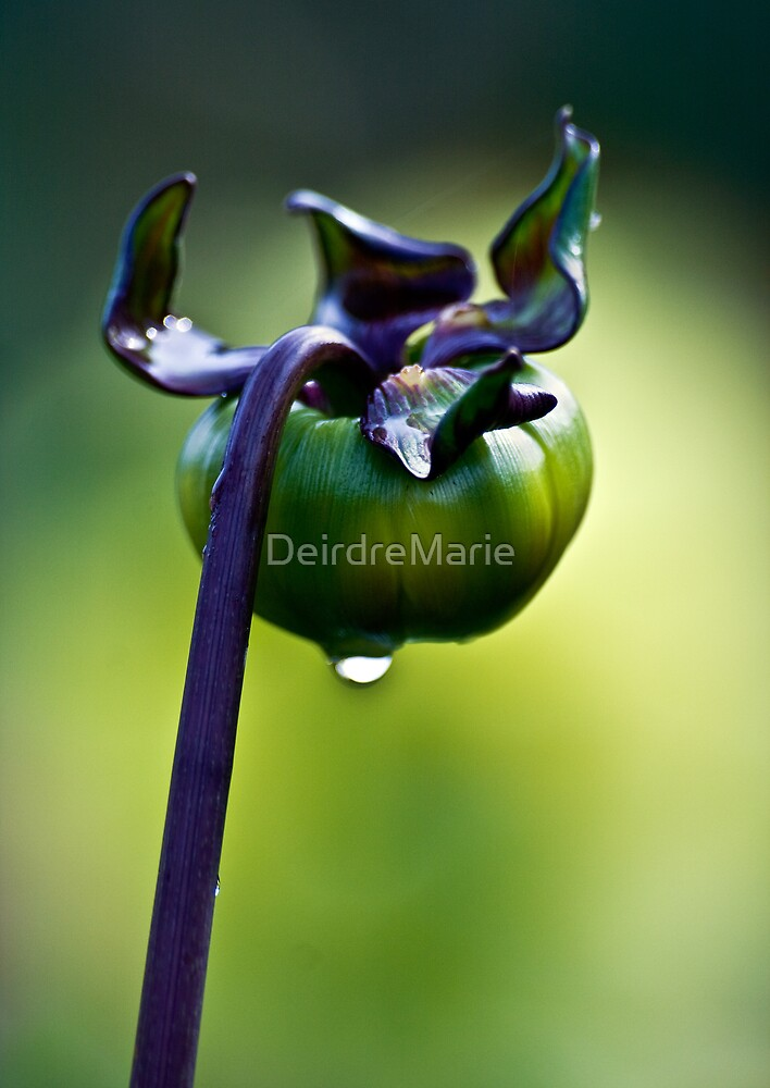 Tears.. by DeirdreMarie