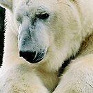 Polar bear by Bente Agerup
