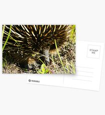 Echidna Postcards