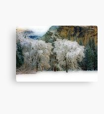 Yosemite #10 Canvas Print