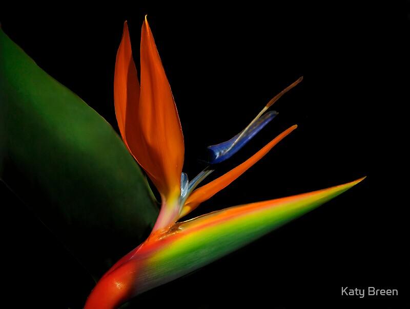 Beauty by Katy Breen