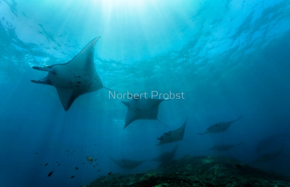 Rush Hour by Norbert Probst