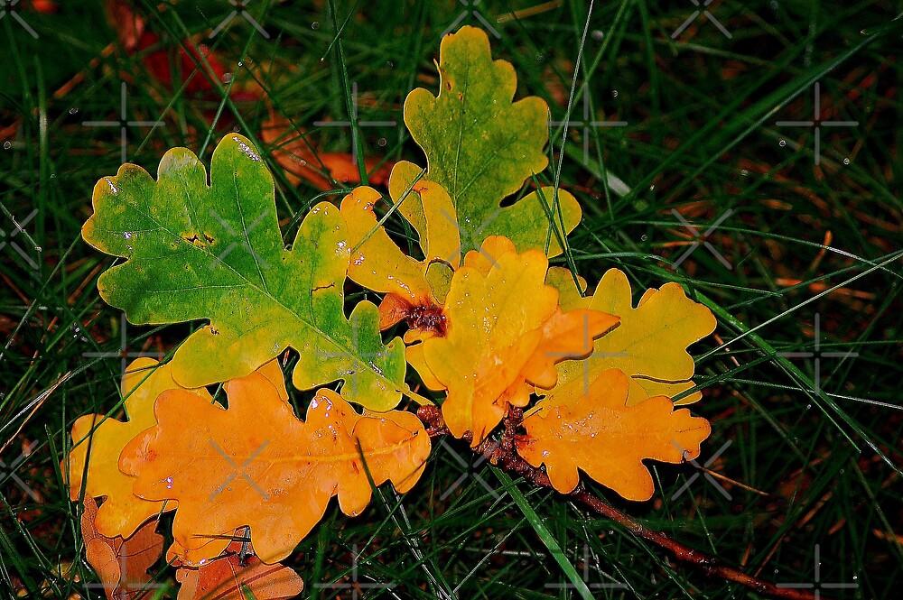 Oak leafes are falling also by loiteke