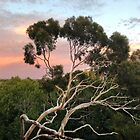 Pink Clouds and Ghost Gum by Roz McQuillan