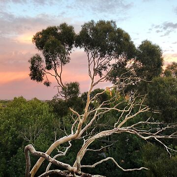 Pink Clouds and Ghost Gum by rozmcq