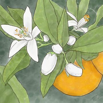Orange Blossom by PenguinLeaf